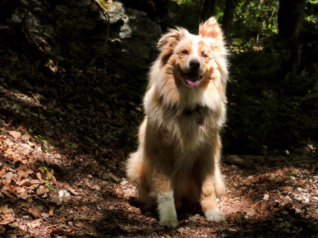 Québec notre chien