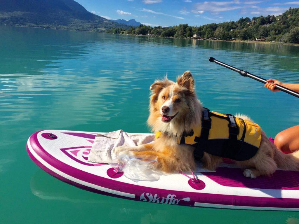 Paddle avec son chien