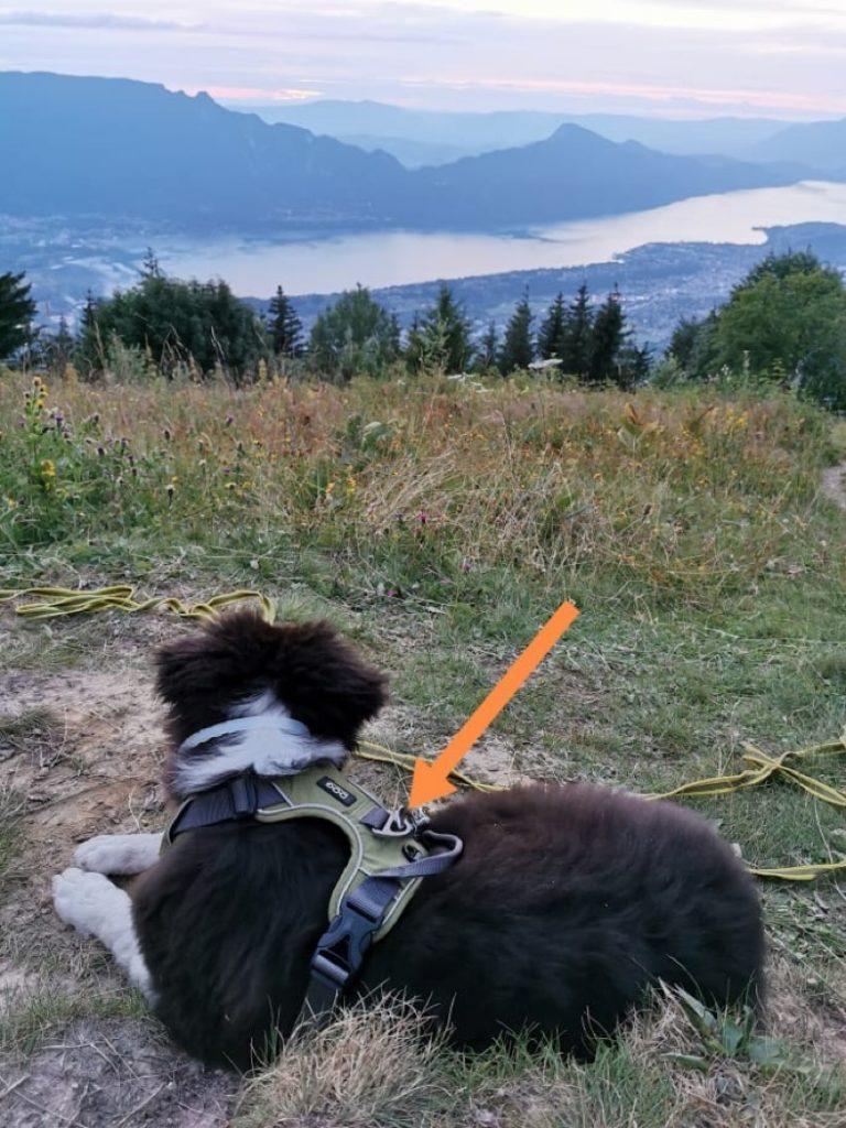 harnais pour chiens