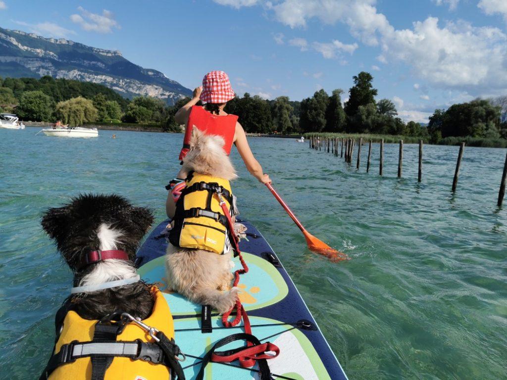 paddle avec chiens